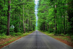 The Best Road in the North Woods